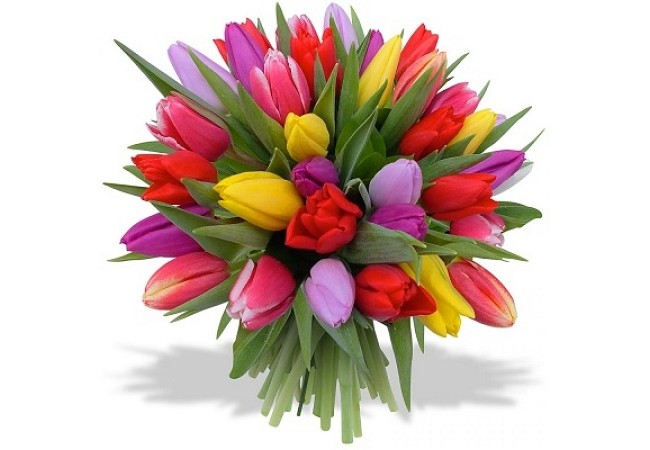Bouquet of 35 mix tulips