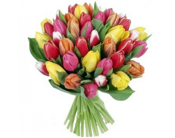 51 colored Tulips